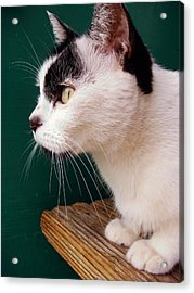 Nine Lives Acrylic Print by JAMART Photography