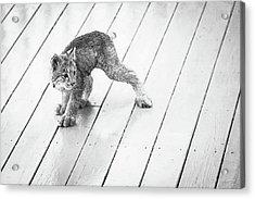 Ninja Lynx Kitty Bw Acrylic Print