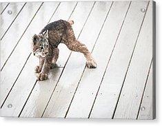 Ninja Lynx Kitty Acrylic Print