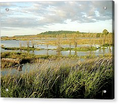 Nisqually Tide Coming In Acrylic Print