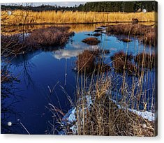 Nj Pinelands Savanna Art Acrylic Print