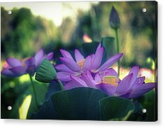 Acrylic Print featuring the photograph No Mud, No Lotus by Cindy Lark Hartman