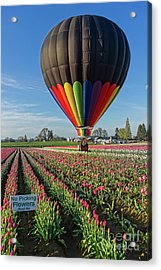 Acrylic Print featuring the photograph No Picking Flowers by Craig Leaper