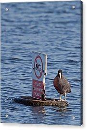No Swimming Acrylic Print