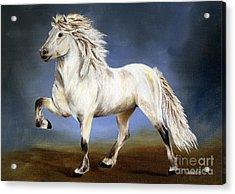Nobility  Icelandic Horse Acrylic Print