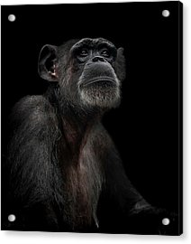 Noble Acrylic Print by Paul Neville