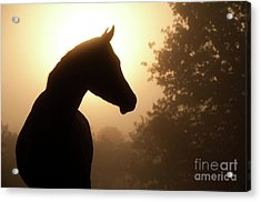 Noble Profile Acrylic Print