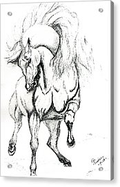 Noble Stallion Acrylic Print by Kim Souza