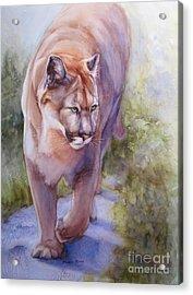 Noble Cougar Acrylic Print