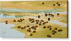 Nomads Acrylic Print by Thomas Sorrell