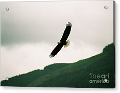 Nooksack Eagle Acrylic Print by Brent Easley