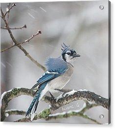 Nor' Easter Blue Jay Acrylic Print