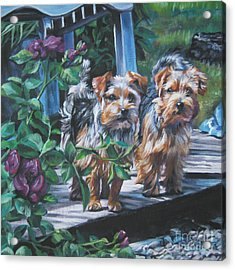 Norfolk Terrier Pair Acrylic Print