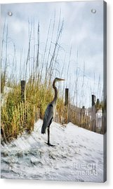 Acrylic Print featuring the photograph Norriego Point Heron by Mel Steinhauer