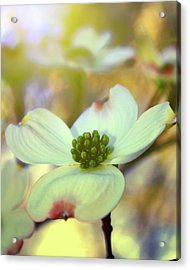 Acrylic Print featuring the painting North Carolina Dogwood State Flower by Gray  Artus