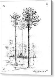 North Carolina- Southern Longleaf Pine Acrylic Print