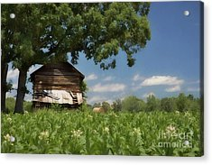 Acrylic Print featuring the photograph North Carolina Tobacco by Benanne Stiens