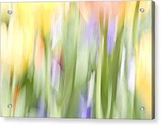 North Hills Tulips II Acrylic Print