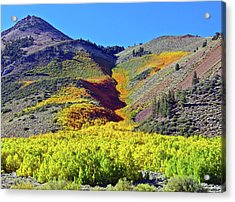 North Lake Aspen Stand Acrylic Print