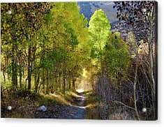 North Lake Aspens 2 Acrylic Print