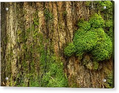 Acrylic Print featuring the photograph North Side Of The Tree by Mike Eingle