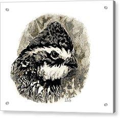 Northern Bobwhite Acrylic Print