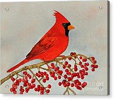 Northern Cardinal Acrylic Print by Norma Appleton