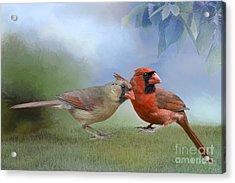 Northern Cardinals On A Spring Day Acrylic Print by Bonnie Barry