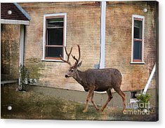 Northern Exposure Photo Paint Acrylic Print