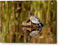 Acrylic Print featuring the photograph Northern Map Turtle by Debbie Oppermann