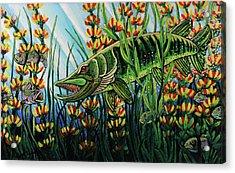Northern Pike Acrylic Print by Bob Crawford