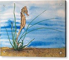 Northern Seahorse Acrylic Print