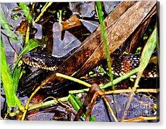 Acrylic Print featuring the mixed media Northern Water Snake by Olga Hamilton