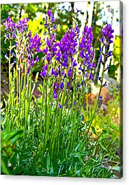Acrylic Print featuring the photograph Northern Wildflowers by Tom Kelly