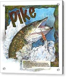 Northerrn Pike Acrylic Print