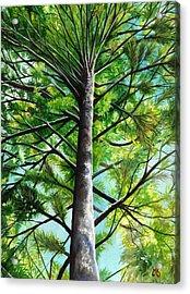 Northwoods Sky Acrylic Print by Carrie Auwaerter