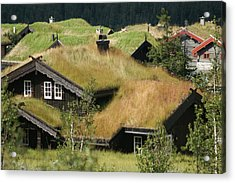 Norwegian Grass Roofs Acrylic Print by Jessica Rose
