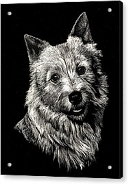 Acrylic Print featuring the drawing Norwich Terrier by Rachel Hames
