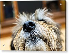 Acrylic Print featuring the photograph Nose In The Air by Sandy Adams