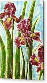 Nostalgic Irises Acrylic Print