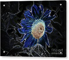 Not A Sunflower Now Acrylic Print