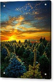 Not Forgotten Acrylic Print by Phil Koch
