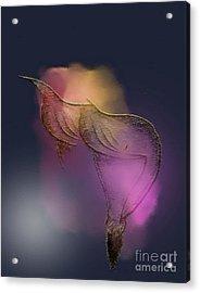 Not So Delicate Acrylic Print by John Krakora