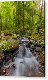 Not-so-dry Creek Acrylic Print by David Gn