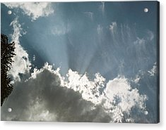 Not So Hidden Acrylic Print by LDPhotography Stephanie Armstrong