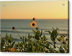 Acrylic Print featuring the photograph Nothing Gold Can Stay by Ana V Ramirez