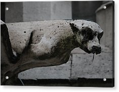 Acrylic Print featuring the photograph Notre Dame Bat Gargoyle by Christopher Kirby