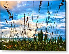 November Day At The Beach In Florida Acrylic Print