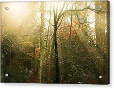 November Light Acrylic Print by Molly Dean