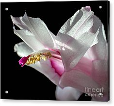 November Splendor Acrylic Print